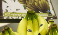 Fairtrade Banana Award voor Plus Hoogendoorn